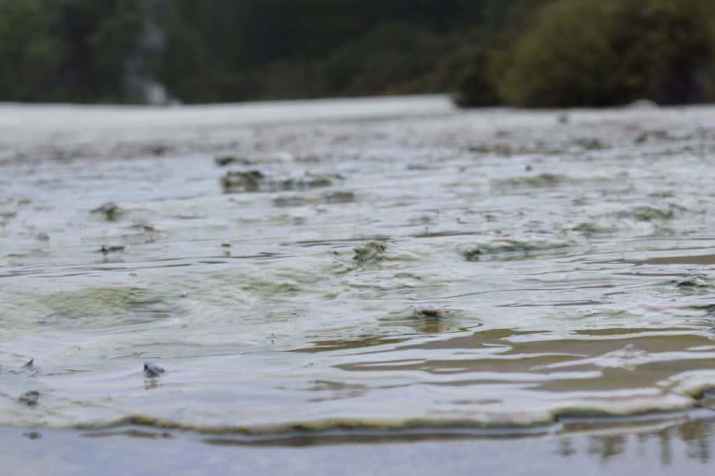 Mud Pools of Wai O Tapu Reserve