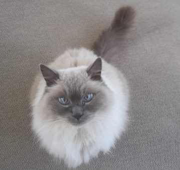 house sitting for cats in new zealand