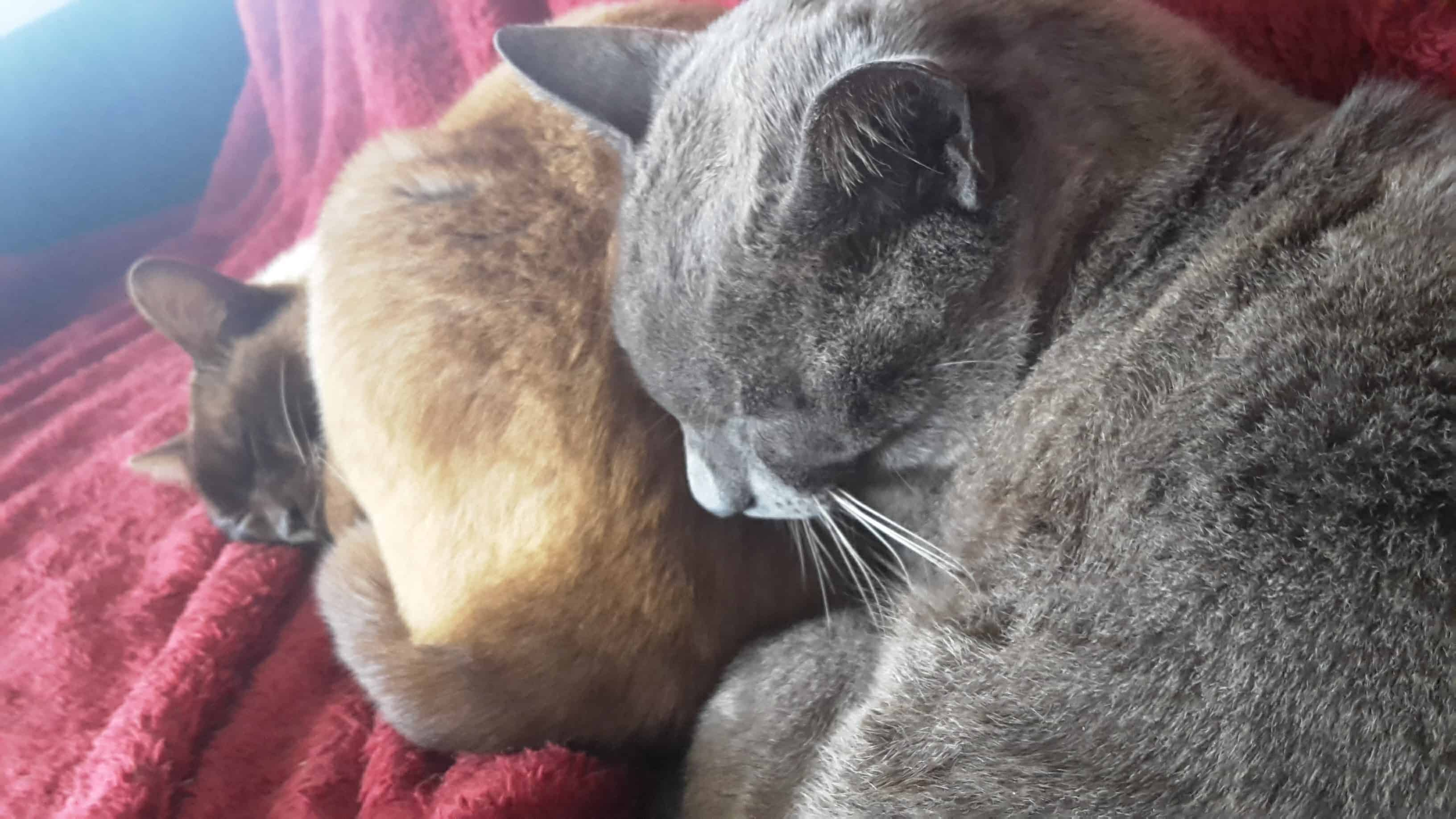 House sitting for Rico and Ruby in Rotorua