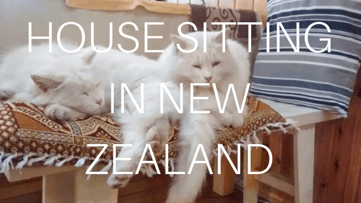House Sitting in New Zealand – Why we love it!